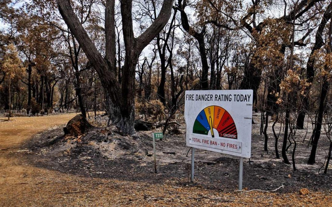 Post bushfire blues, how natural medicine might help